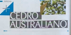 O CEDRO AUSTRALIANO – REVISTA REFERÊNCIA FLORESTAL