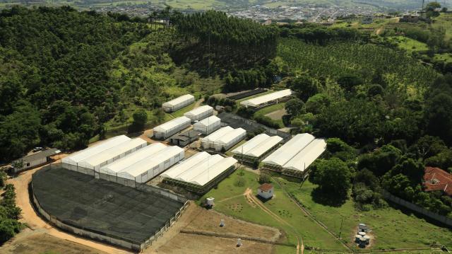 Vista aérea do viveiro Bela Vista Florestal